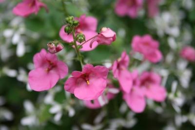 Rosa Blüten beim Texthaus, dem Experten für Werbetexte