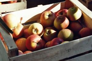 Lebensmittelunverträglichkeiten beeinflussen das Leben vieler Menschen.