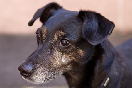 Fips – Buchstabenhund in der Werbeagentur Rosa Welt in Nürnberg